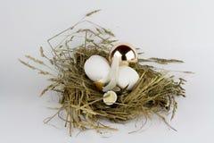 巢用金黄鸡蛋 免版税库存照片