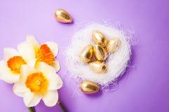 巢用鸡蛋和黄水仙 免版税图库摄影