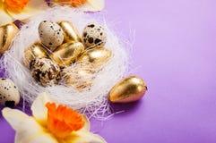 巢用鸡蛋和黄水仙 免版税库存图片