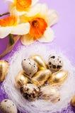 巢用鸡蛋和黄水仙 库存照片