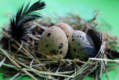 巢用鹌鹑蛋和羽毛在浅绿色的背景 图库摄影