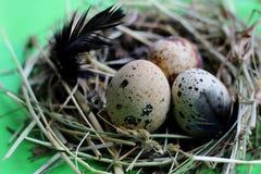 巢用鹌鹑蛋和羽毛在浅绿色的背景 免版税库存照片