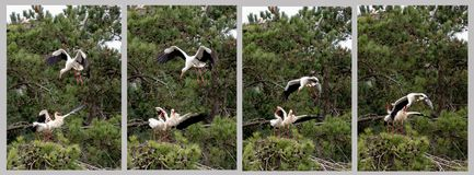 巢的攻击 免版税库存图片
