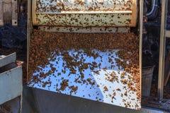 工业分离器葡萄种子 免版税图库摄影