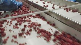 工业处理冷冻莓 股票录像