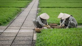 工作在一个公园的未认出的花匠在胡志明市,越南 免版税库存照片