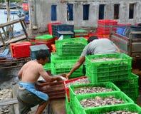 工作在一个批发鱼市上的人们 库存照片