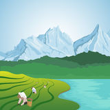 工作在一个露台的农场的豪华的领域的人们在山背景的河附近  库存照片