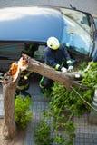 工作在一棵残破的树的消防员在风暴以后。 免版税库存照片
