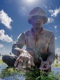 工作在他的种植的海草海农场的印度尼西亚农夫耕种的更多,努沙Penida,印度尼西亚 库存图片