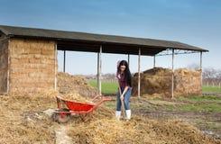 工作在农场的妇女卑鄙的勾当 免版税库存图片