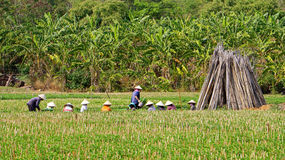 工作在农田的农夫。LAM DONG,越南12月22日 免版税图库摄影