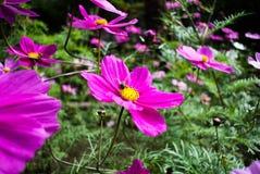 工作在冬天的蜂与 免版税图库摄影