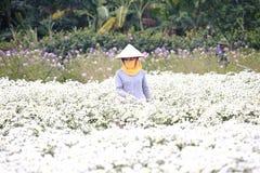 工作在她的庭院里的少妇在河内, 2016年12月02日的越南 库存图片