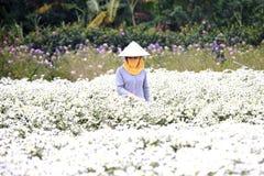 工作在她的庭院里的少妇在河内, 2016年12月02日的越南 库存照片