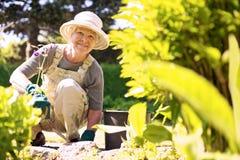 工作在她的庭院里的愉快的老妇人 库存照片