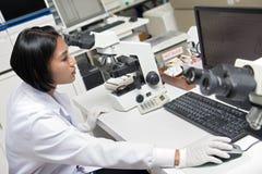 工作在实验室的妇女 免版税图库摄影