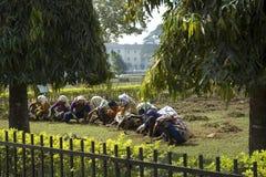 工作在庭院里的一个小组印度妇女 印第安妇女 印度,新的德里1月29日2009年 库存图片
