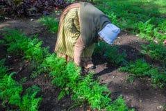 工作在庭院里的先驱妇女在旧世界威斯康辛 免版税库存照片
