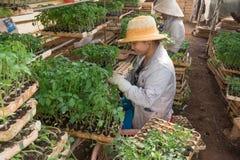 工作在庭院里的女性花匠 免版税库存图片