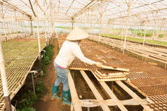 工作在庭院里的女性花匠 免版税库存照片
