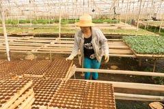 工作在庭院里的女性花匠 库存照片
