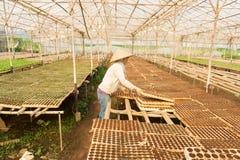 工作在庭院里的女性花匠 免版税图库摄影