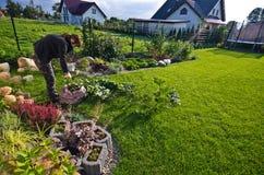 工作在庭院里的妇女,切开植物的剩余枝杈 免版税库存图片