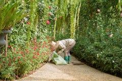 工作在庭院里的花匠 免版税图库摄影