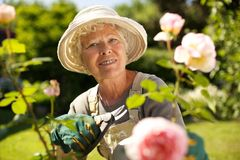 工作在庭院里的资深妇女 免版税库存图片