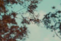 工作在建立的蜘蛛网 免版税库存图片