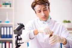 工作在新的种类的实验室的男性昆虫学家 免版税库存照片