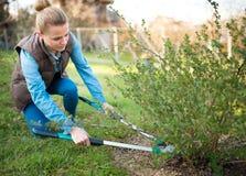 工作在春天庭院和整理branche的妇女花匠 库存照片