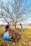 工作在果树园的母亲和女儿 图库摄影