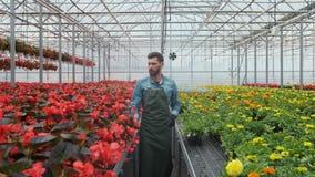 工作在温室幼木的花匠顺利地投入 股票录像
