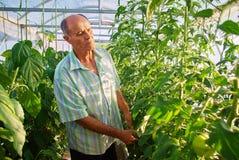工作在温室庭院里的成熟男性花匠 免版税图库摄影