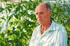 工作在温室庭院里的成熟男性花匠 免版税库存图片