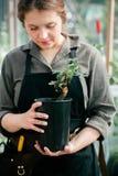 工作在温室的年轻逗人喜爱的夫人 免版税库存照片