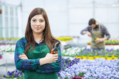 工作在温室里的妇女 免版税库存图片