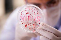 工作在病毒疫苗的实验室的男性医生 免版税库存照片