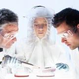 工作在科学实验室的医疗保健研究员 免版税图库摄影