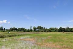 工作在米领域的农夫 图库摄影
