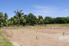 工作在米领域的农夫 库存照片