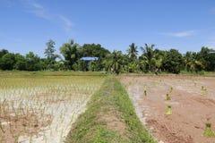 工作在米领域的农夫 免版税库存图片