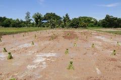 工作在米领域的农夫 免版税库存照片