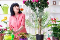 工作在花店的妇女卖花人 库存照片