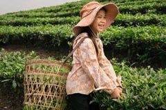 工作在茶园, Sapa的越南孩子 免版税库存照片