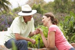 工作在菜园里的资深父亲和成人女儿 库存照片