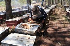 工作在蜂农场的蜂农 库存图片