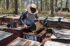 工作在蜂农场的蜂农 免版税库存照片